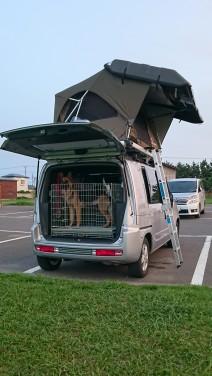 愛犬とルーフテント